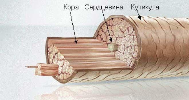 Восстановление структуры волос человека